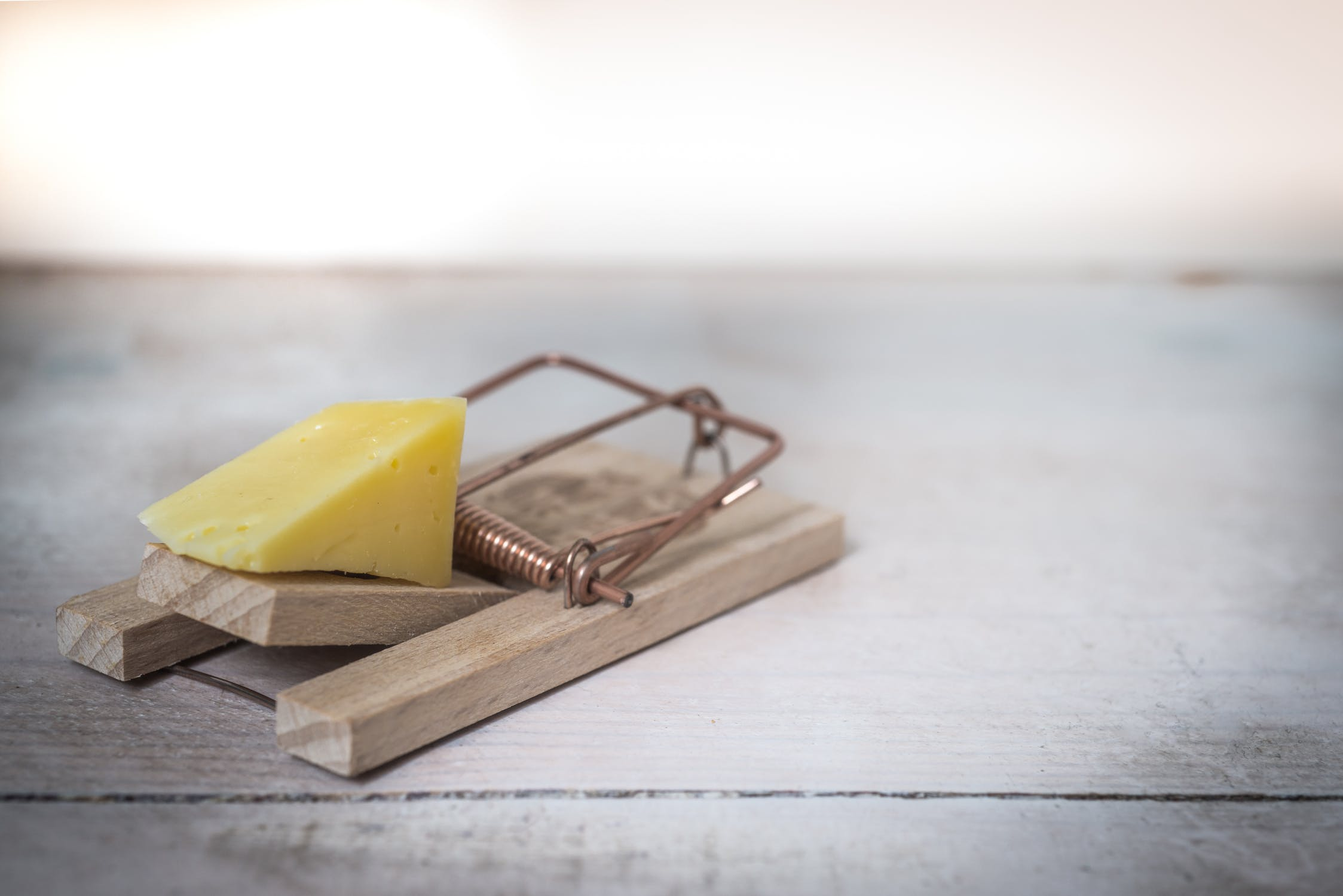 mouse-trap-cheese-device-trap-633881